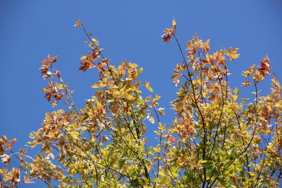 jesen-u-banatu-0010_foto-jovan-njegovic-drndak