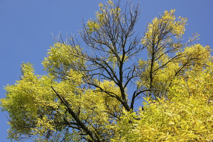 jesen-u-banatu-0011_foto-jovan-njegovic-drndak