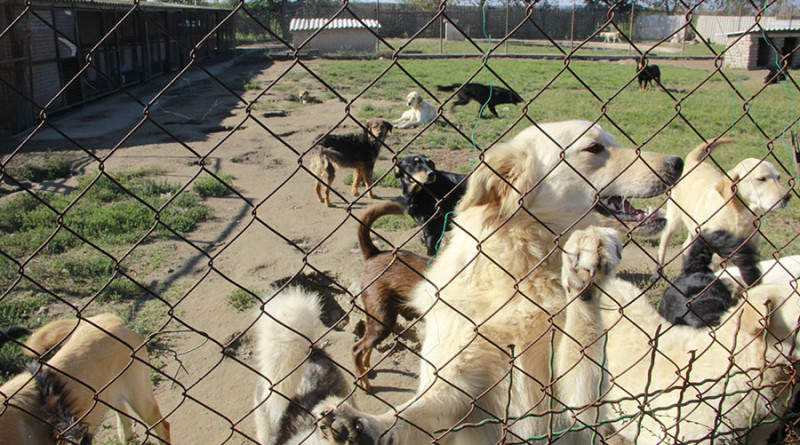 """LJUBITELJI ŽIVOTINJA I PRIRODE """"ZELENE ŠAPE"""": Pomoć za životinje"""