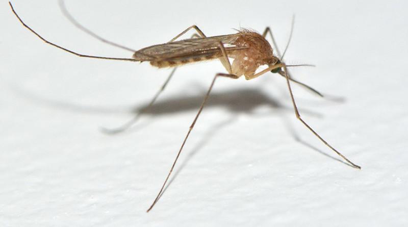 UPOZORENJE PČELARIMA:Od 24. maja do 8.juna tretmani protiv komaraca