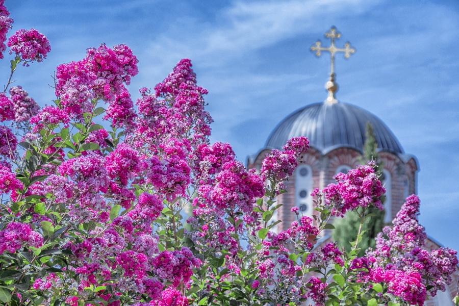 2-Crkvina u bojama leta