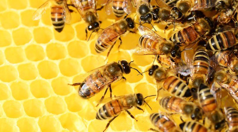 UPOZORENJE PČELARIMA U ZRENJANINU: Tretmani protiv komaraca iz vazduha i sa zemlje