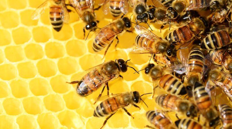 MELENCI: U nedelju u znaku meda i ostalih pčelinjih proizvoda