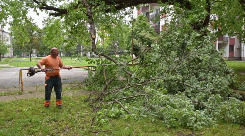 NEVREME U GRADU: Vetar čupao drveće i skidao crep