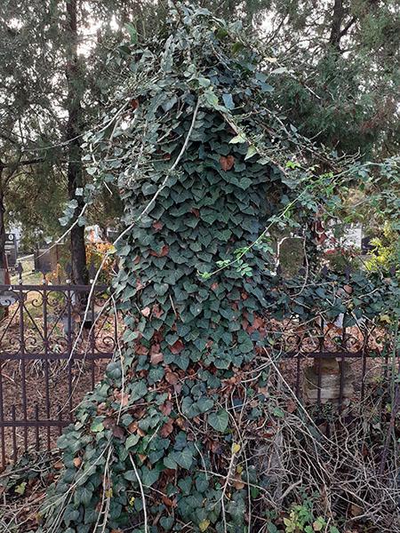 6-7-Tomasevacko grblje - Grob Nestora Dimitrijevica zasticen i zapusten