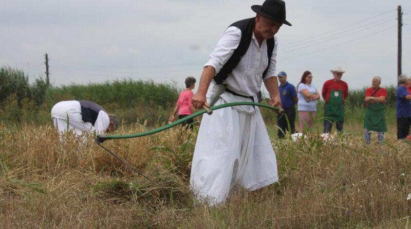 ODRŽANI 37. ŽETELAČKI DANI U MUŽLJI: Život seljaka u polju