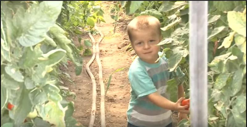Porodica bakoš iz Lukinog Sela bavi se povrtarstvom: pored truda, važni su i podsticaji države