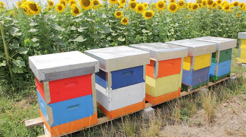 PČELARI U HODU PREVAZILAZE PROBLEME I BORE SE ZA BOLJU POZICIJU