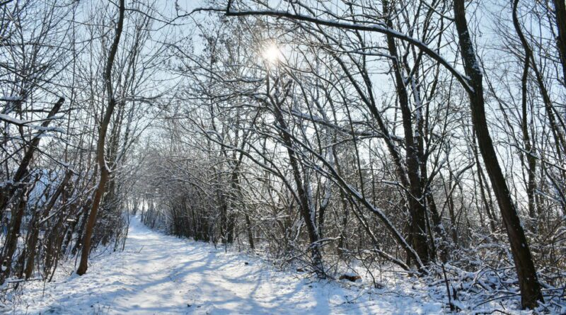 FOTO-GALERIJA: Snežni dani