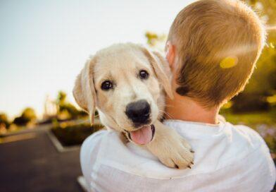 KULTURNI CENTAR: Dečja radionica o kućnim ljubimcima