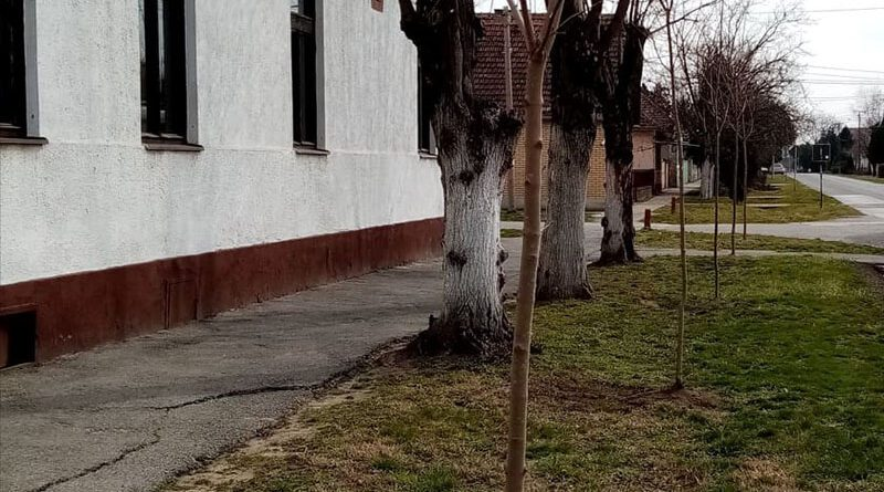 Tanácsvállasztások Nagybecskereken